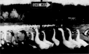 One-Way Sign in 1992