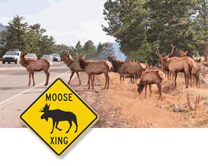 moose and elk crossing animal crossing signs