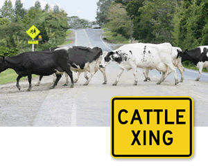 Cattle Crossing Road Signs