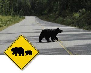 Diamond Road Signs