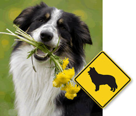 Dog Breed Crossing Signs