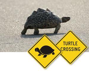 Turtle Crossing Signs