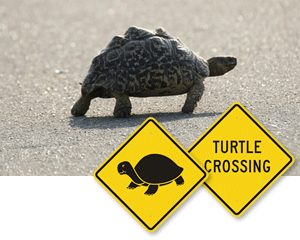 Turtle Crossing Signs